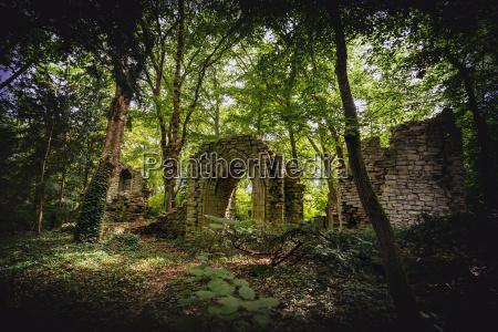 albero alberi pietra sasso rovina castello