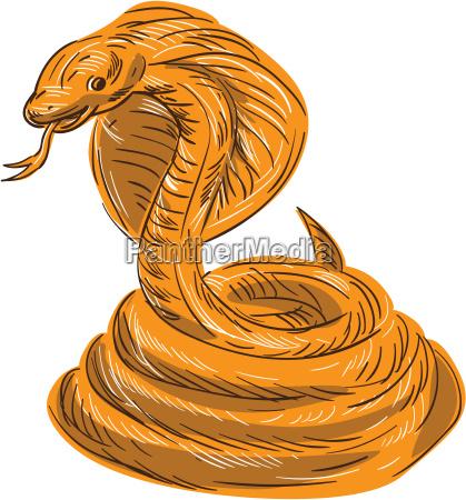 cobra viper snake coiled drawing