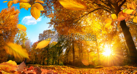 golden autumn in a park with