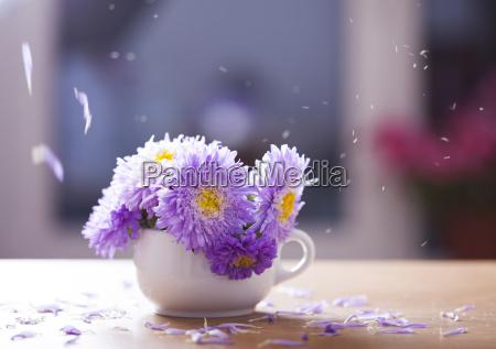 bellissimi fiori di aster viola e