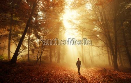 passeggiata nel bosco con lo stordimento