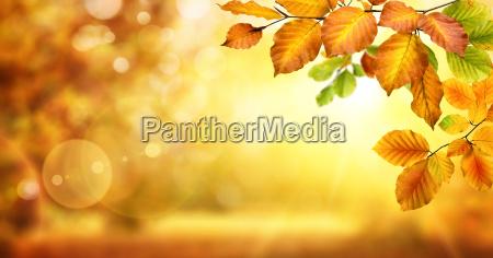 foglie gialle decorano uno sfondo incandescente