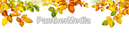 autumn background with colorful leaves of
