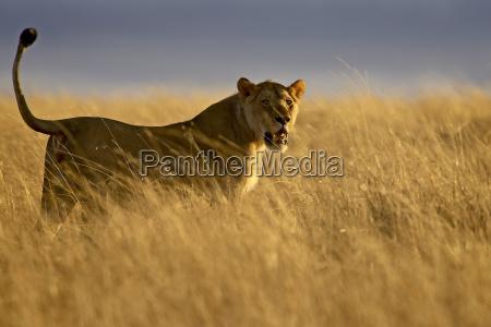 viaggio viaggiare ambiente colore animale africa