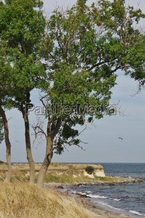 fehmarn island southeast coast at staberhuk
