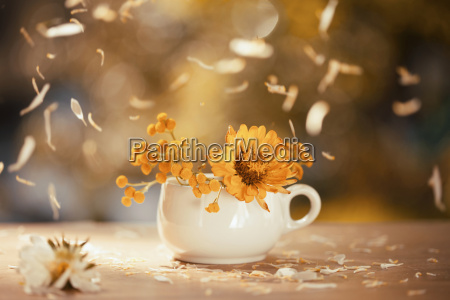 fiore pianta festa petali decorazione astro