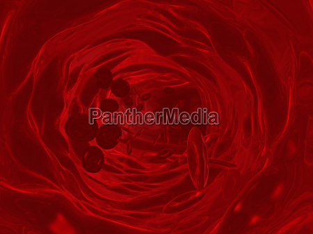 vene vasi globulo arterie