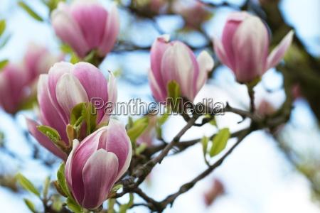 bello bella foglia colore albero giardino