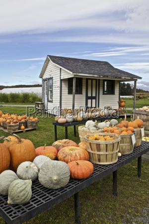 agricoltura stati uniti damerica usa america