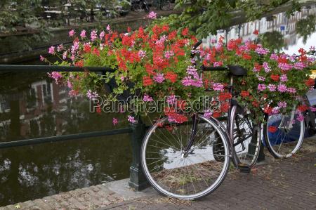 viaggio viaggiare ponte fiore fiori paesi