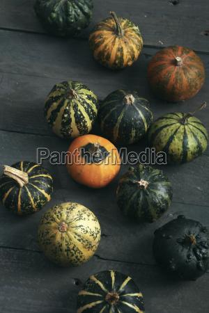 zucche ornamentali