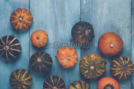 zucche ornamentali su legno blu