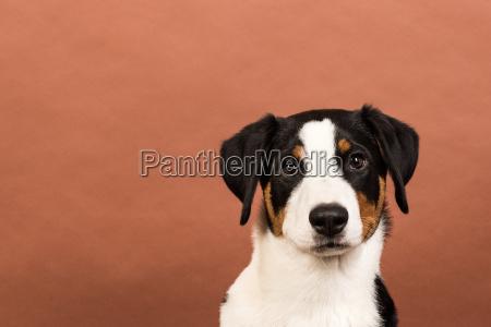 animale domestico animali domestici cane