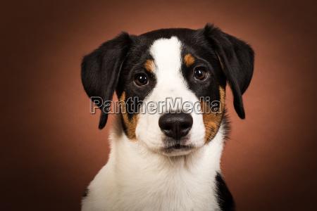 cane cani cucciolo