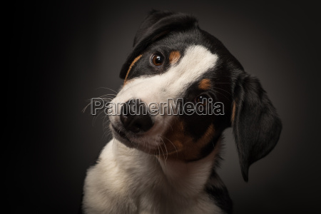 cane cani cucciolo cuccioli