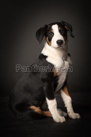 cucciolo, di, cane, rende, posto, a - 19348060