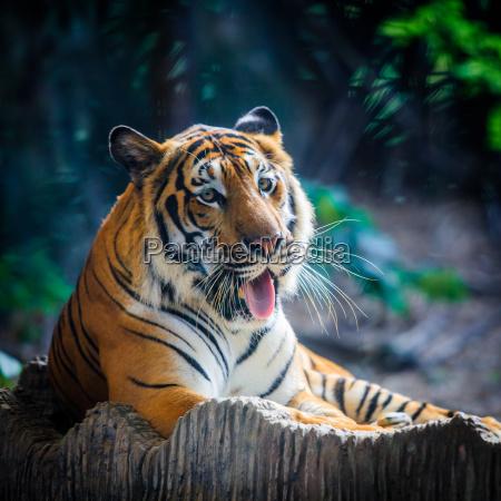 pericolo albero animale mammifero asia faccia