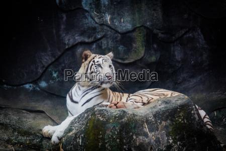 parco animale selvaggio gatto tigre zoo
