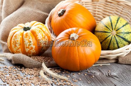 cibo legno verdura zucche zucca autunno