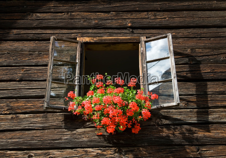 flowers decorating farm window