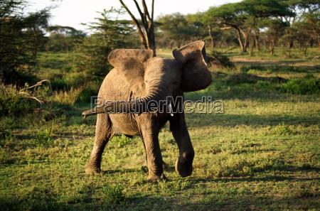 viaggio viaggiare animale parco nazionale africa