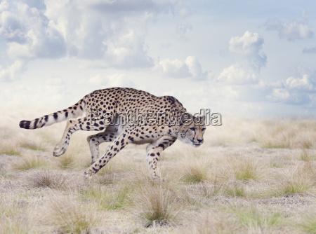 animale mammifero allaperto natura predatore gatto