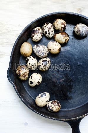 still life di quaglie fresche uova
