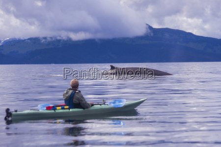 male sea kayaker watching fin whale