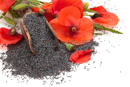 semi di papavero