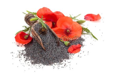 spezia condimento rilasciato fiore pianta grano