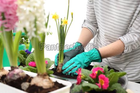 fioritura fiorire fiore fiori radice pianta