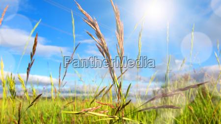 meadow landscape in spring