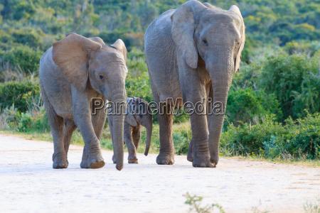 viaggio viaggiare rilasciato animale mammifero selvaggio