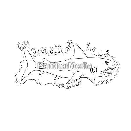 shark water side drawing