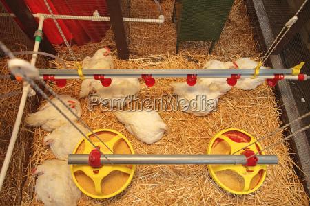 casa costruzione moderno animale agricoltura uccelli
