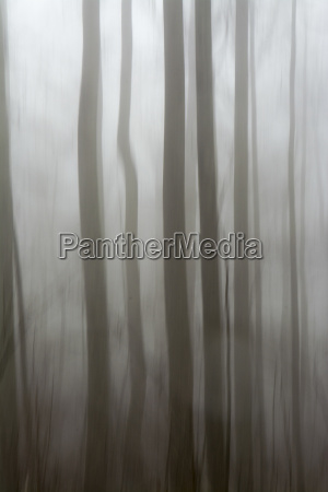 misty trees along the trail to