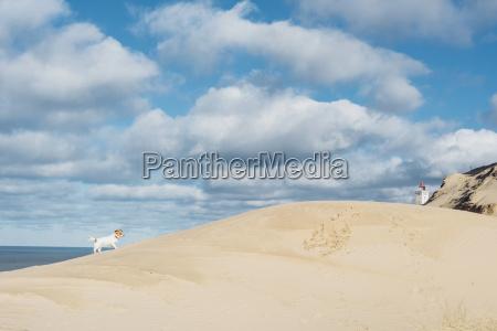 denmark north jutland dog in sand