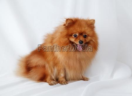 animale animale domestico mammifero marrone ritratto