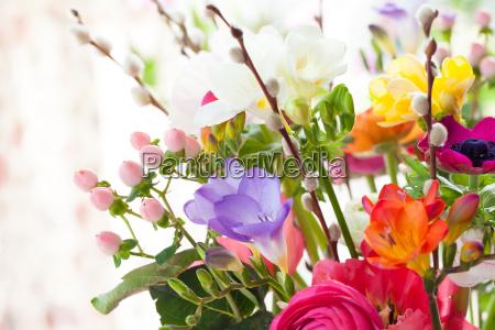 fiori di primavera colorata