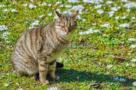 gatto sul prato tra i fiori