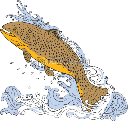 brown trout swimming up turbulent water