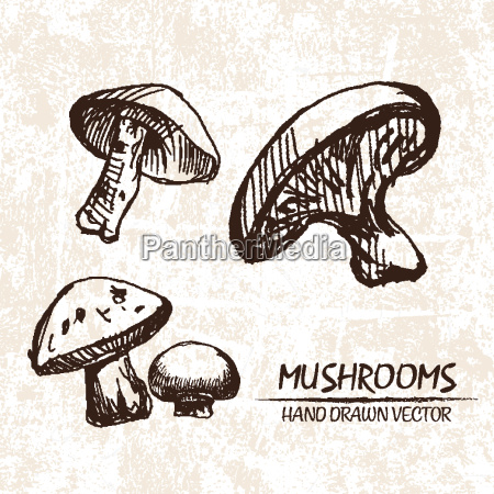 funghi vettoriali digitali disegnati a mano