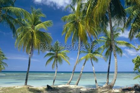 viaggio viaggiare albero alberi palma fuori