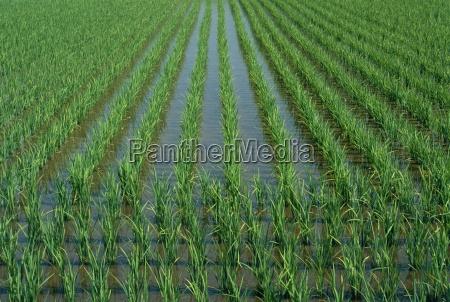 viaggio viaggiare agricoltura linee campi fuori