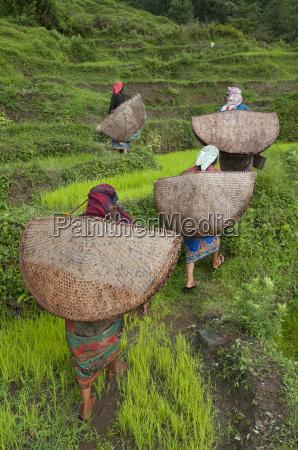 donna donne agricolo culturalmente femminile asia