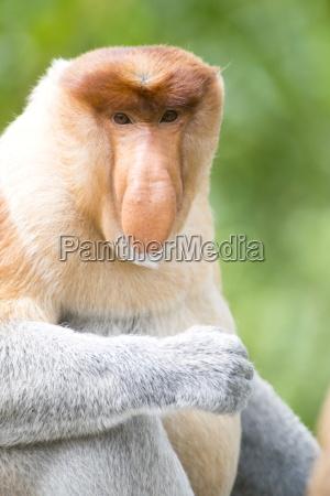 viaggio viaggiare colore animale mammifero asia