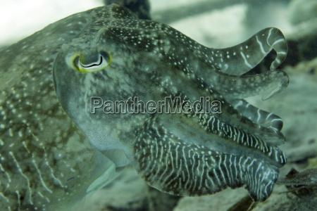 viaggio viaggiare colore animale mollusco asia