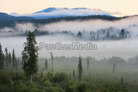 nebbia mattutina in wells grey provincial