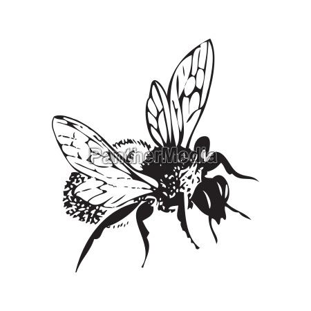 storico rilasciato animale insetto antico fauna