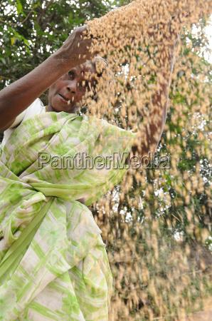 setacciatura cereali nelle zone rurali dellindia